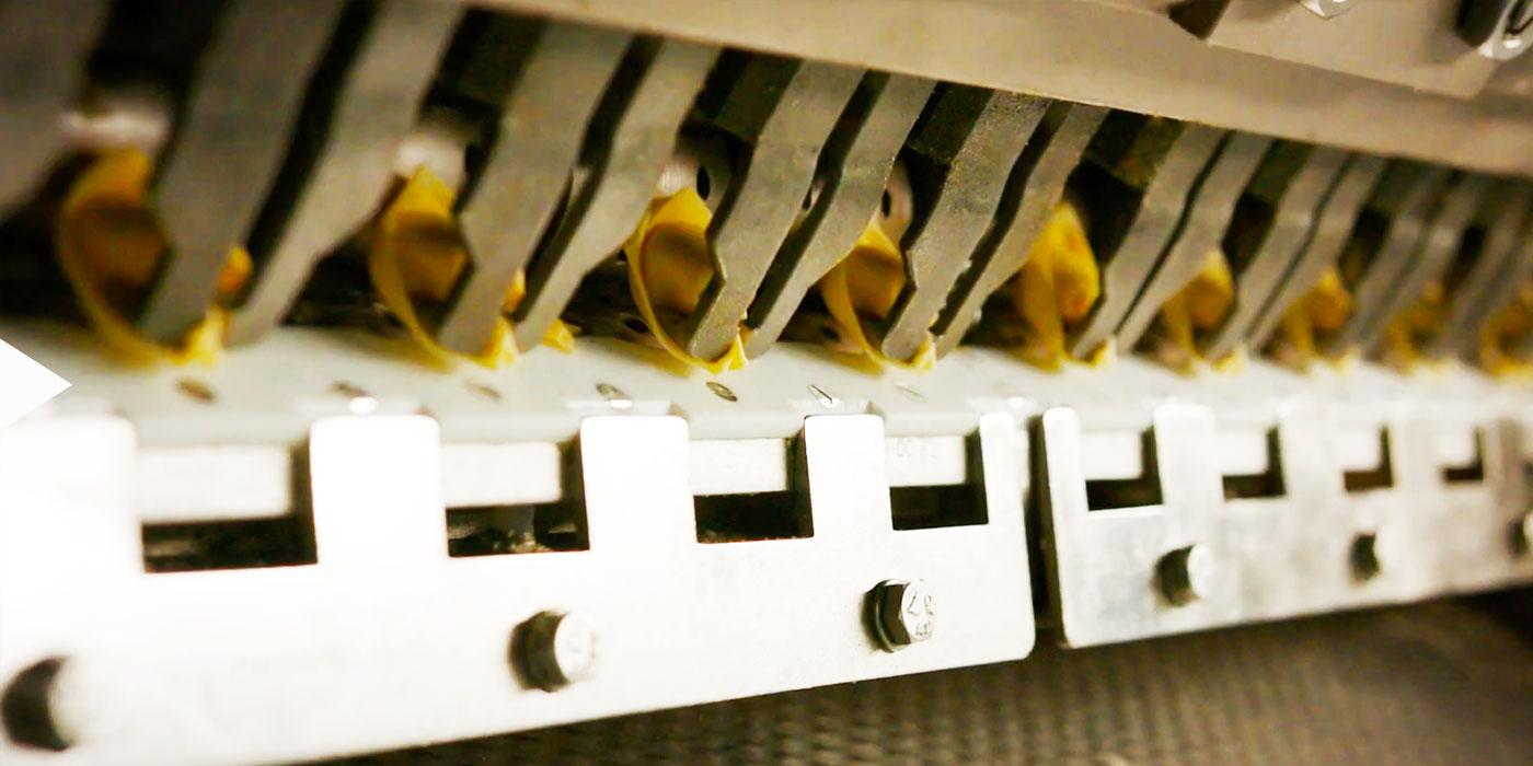 pasta-fresca-scoiattolo-storia-5-new